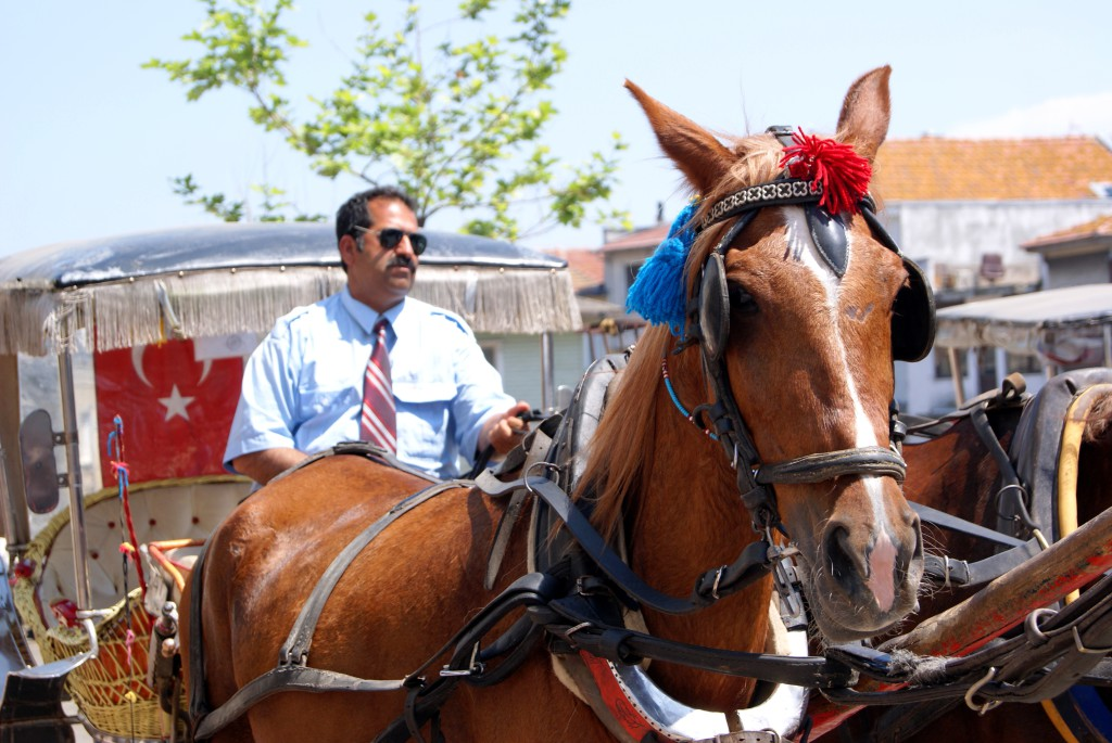 häst och vagn istanbul