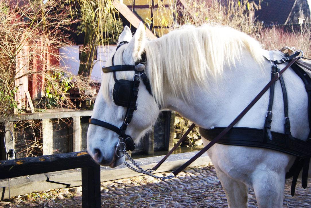 den_gamle_by_hästar