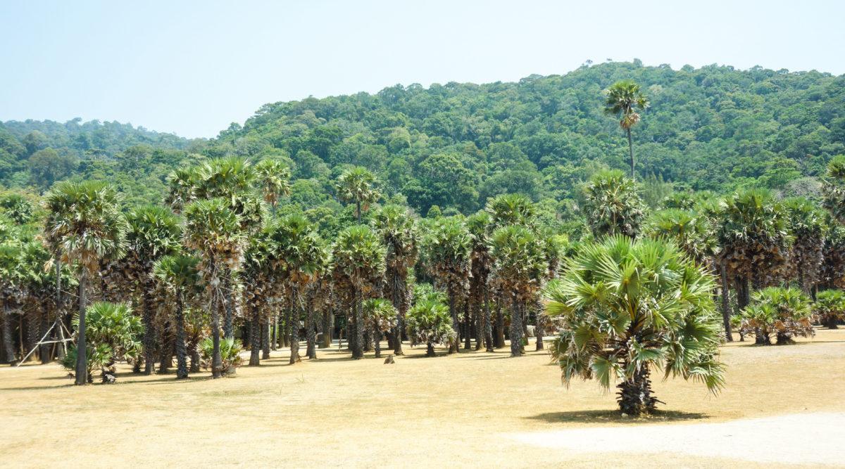 träd_nationalpark