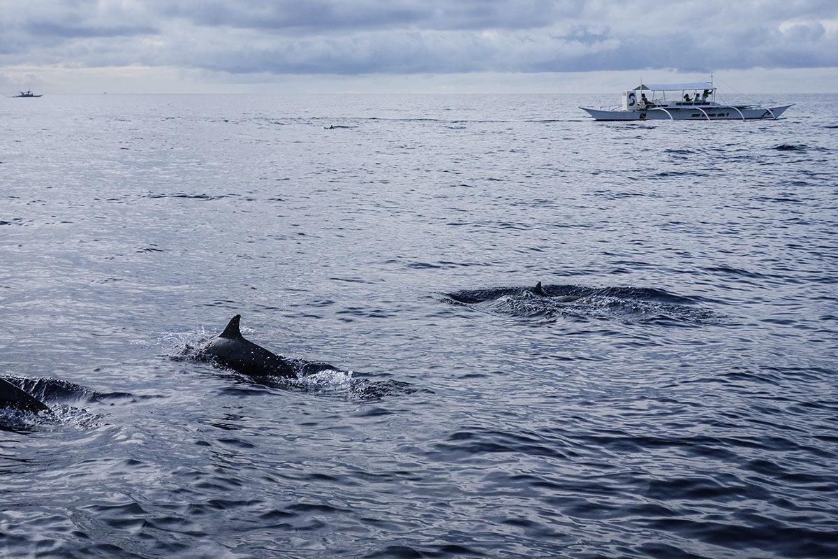 delfiner9