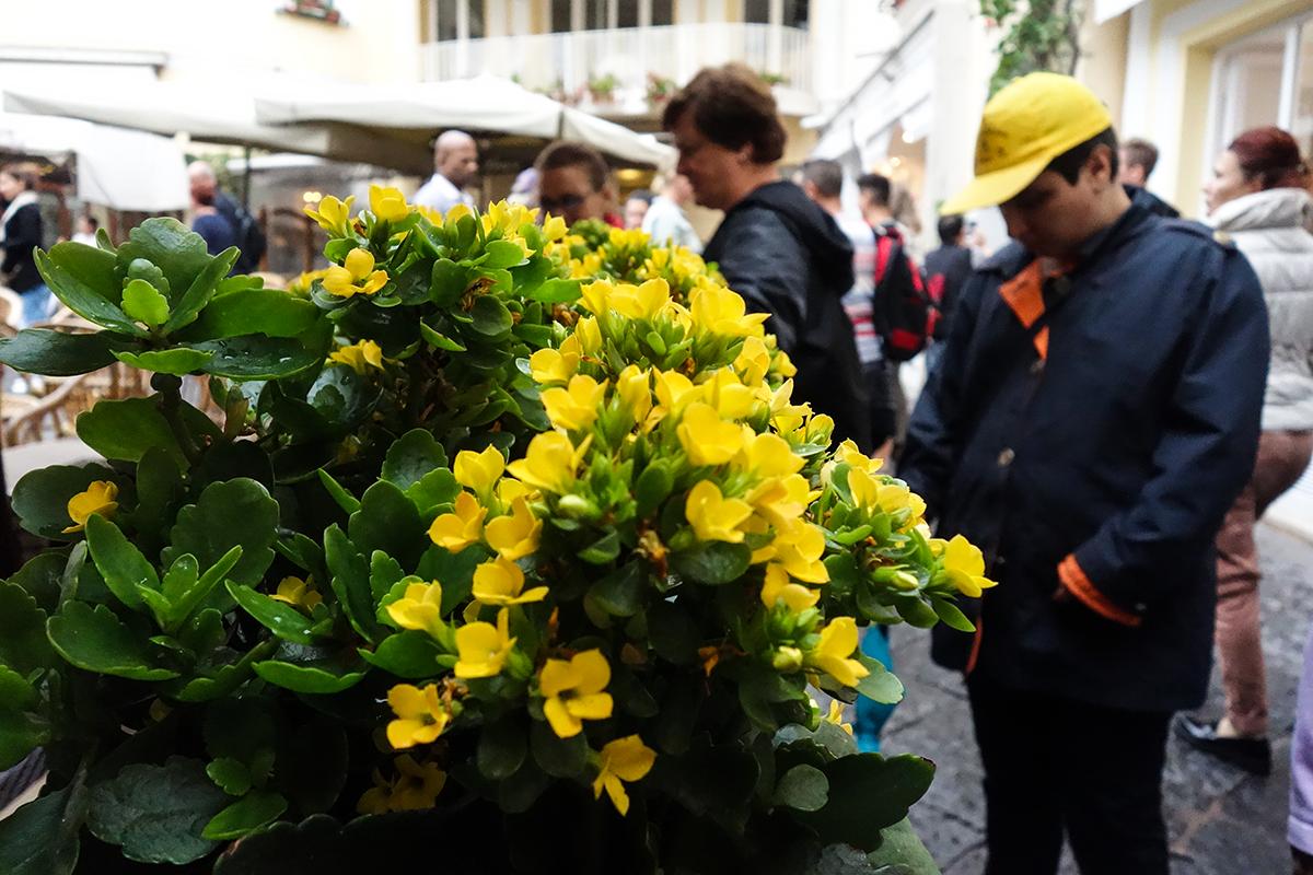flowers capri