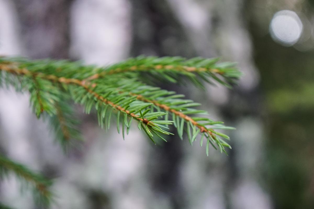 skogsutflykt höst