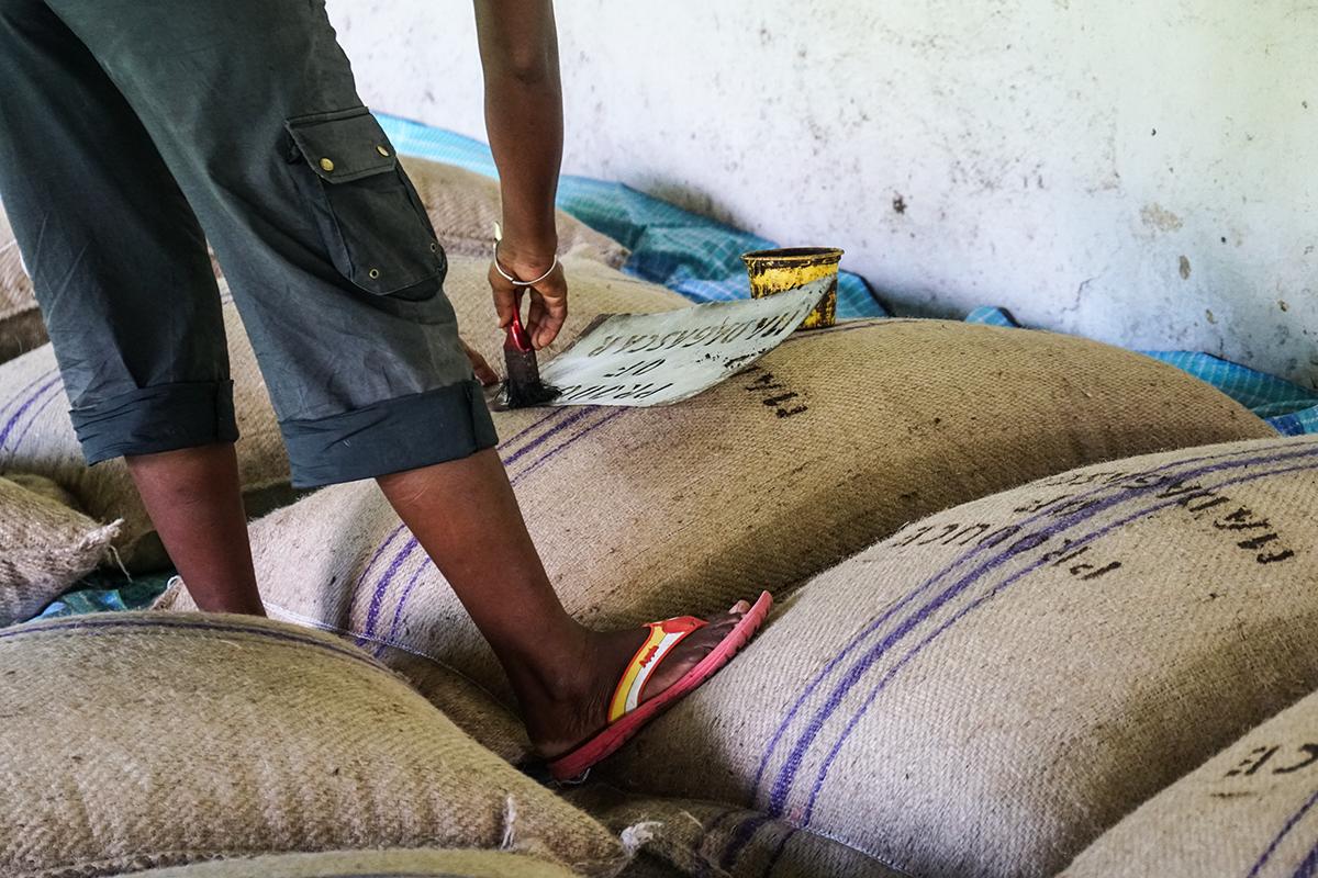 kakaoplantage madagaskar