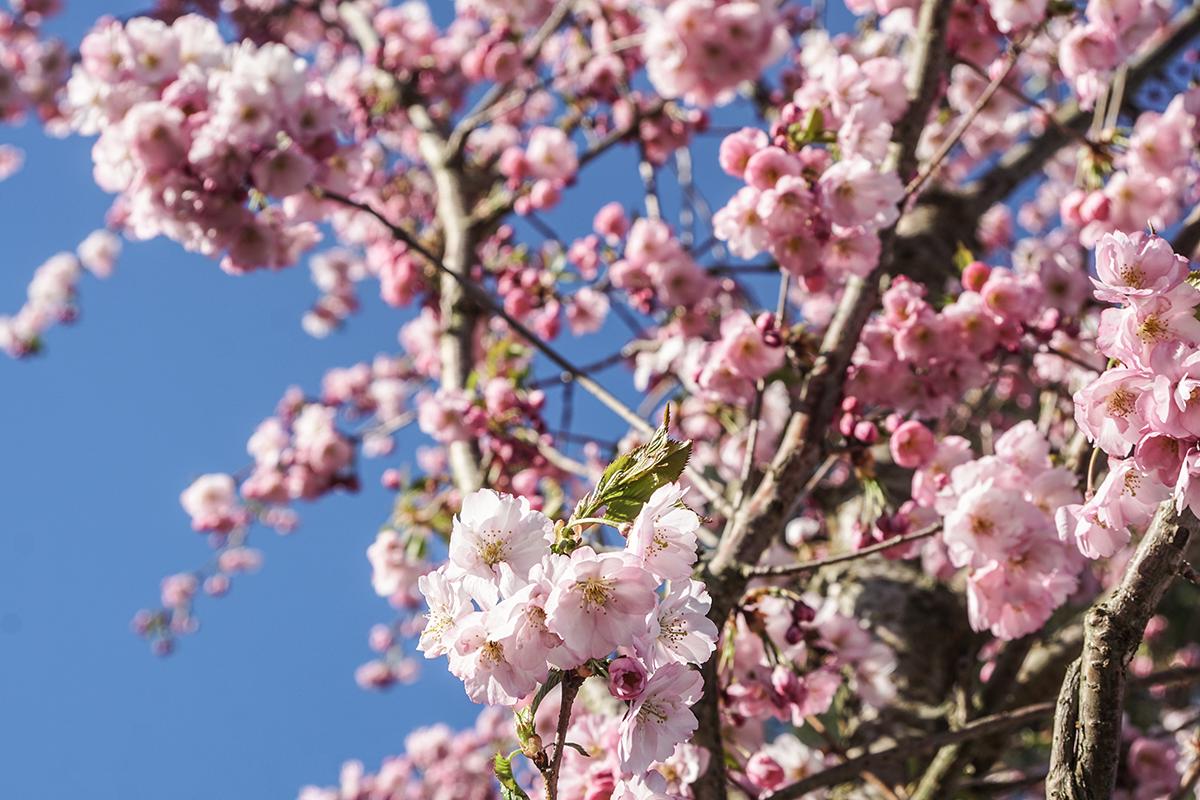 blommor stockholm