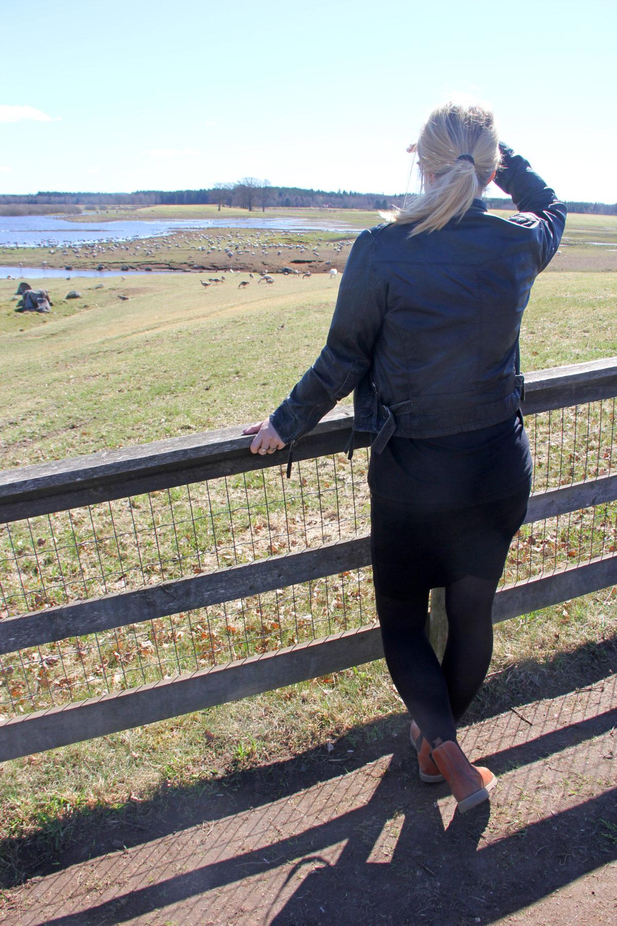 att göra i skara Hornborgasjön