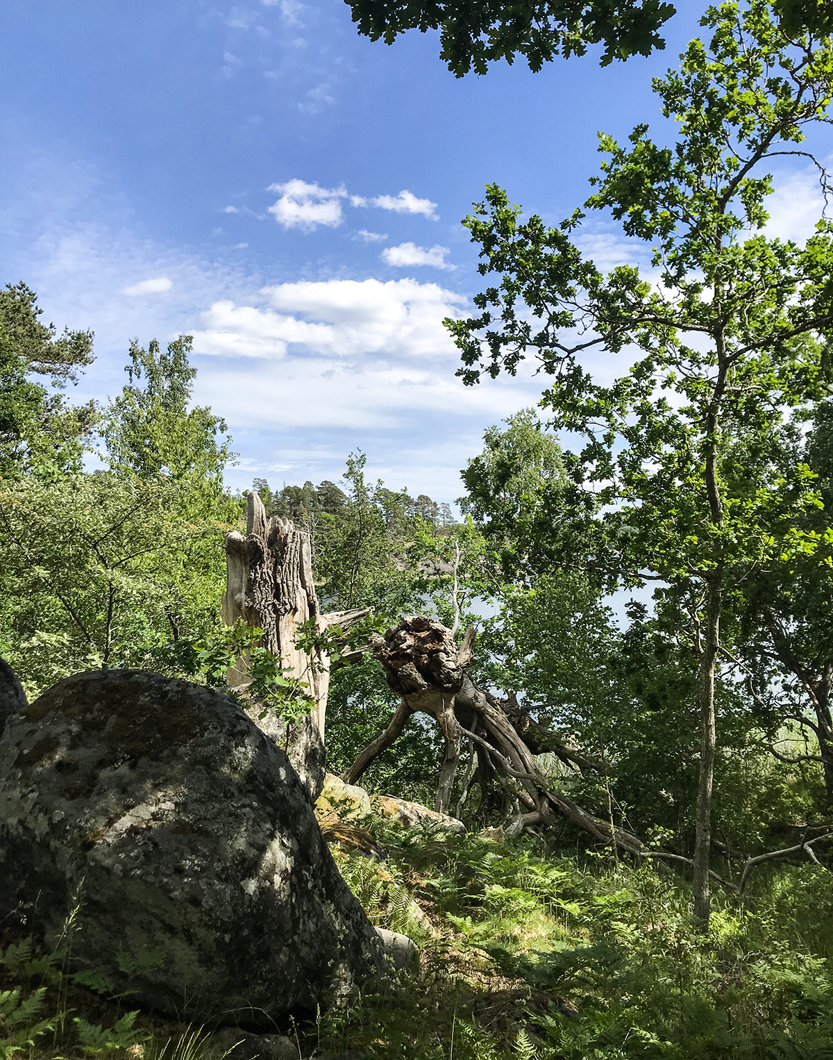 Käringboda naturreservat nynäshamn