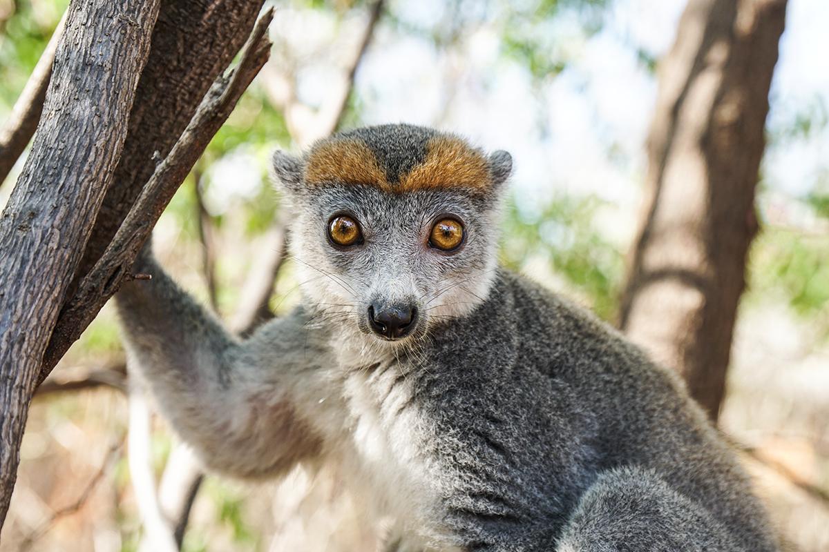tips om Madagaskar