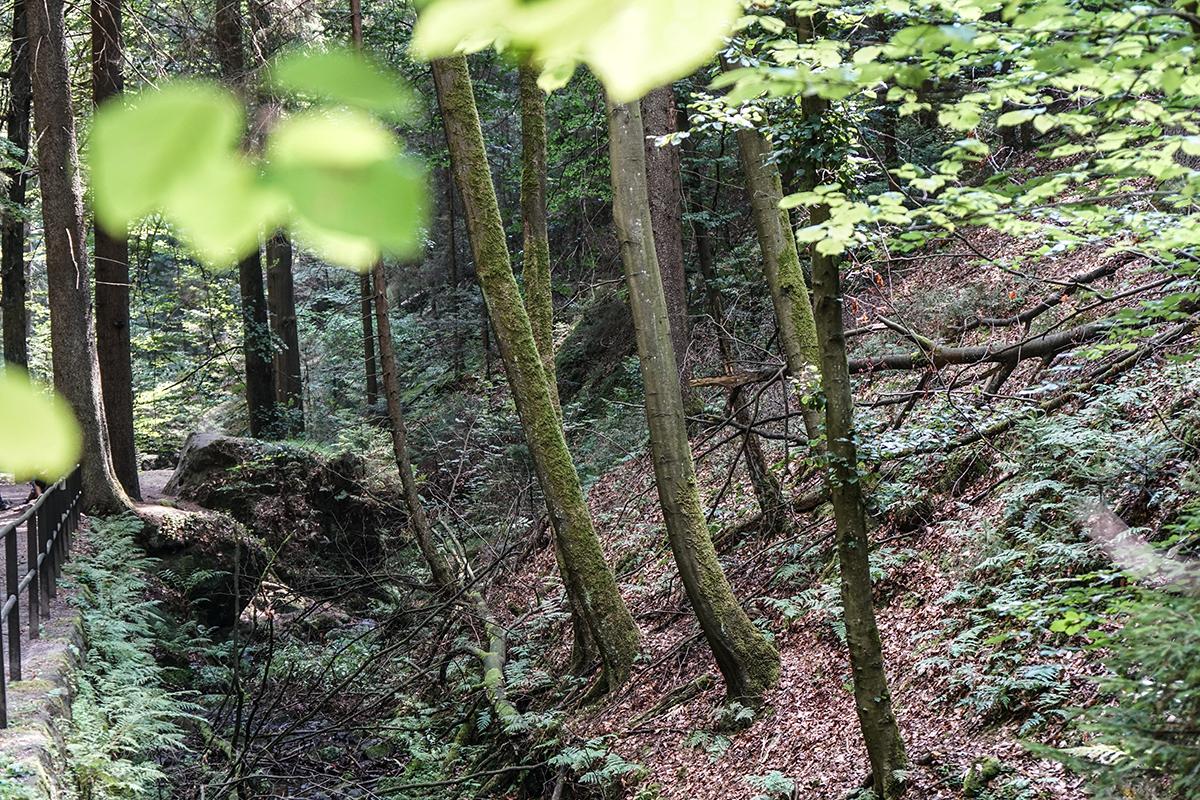 vandra i tyskland - Sächsische Schweiz