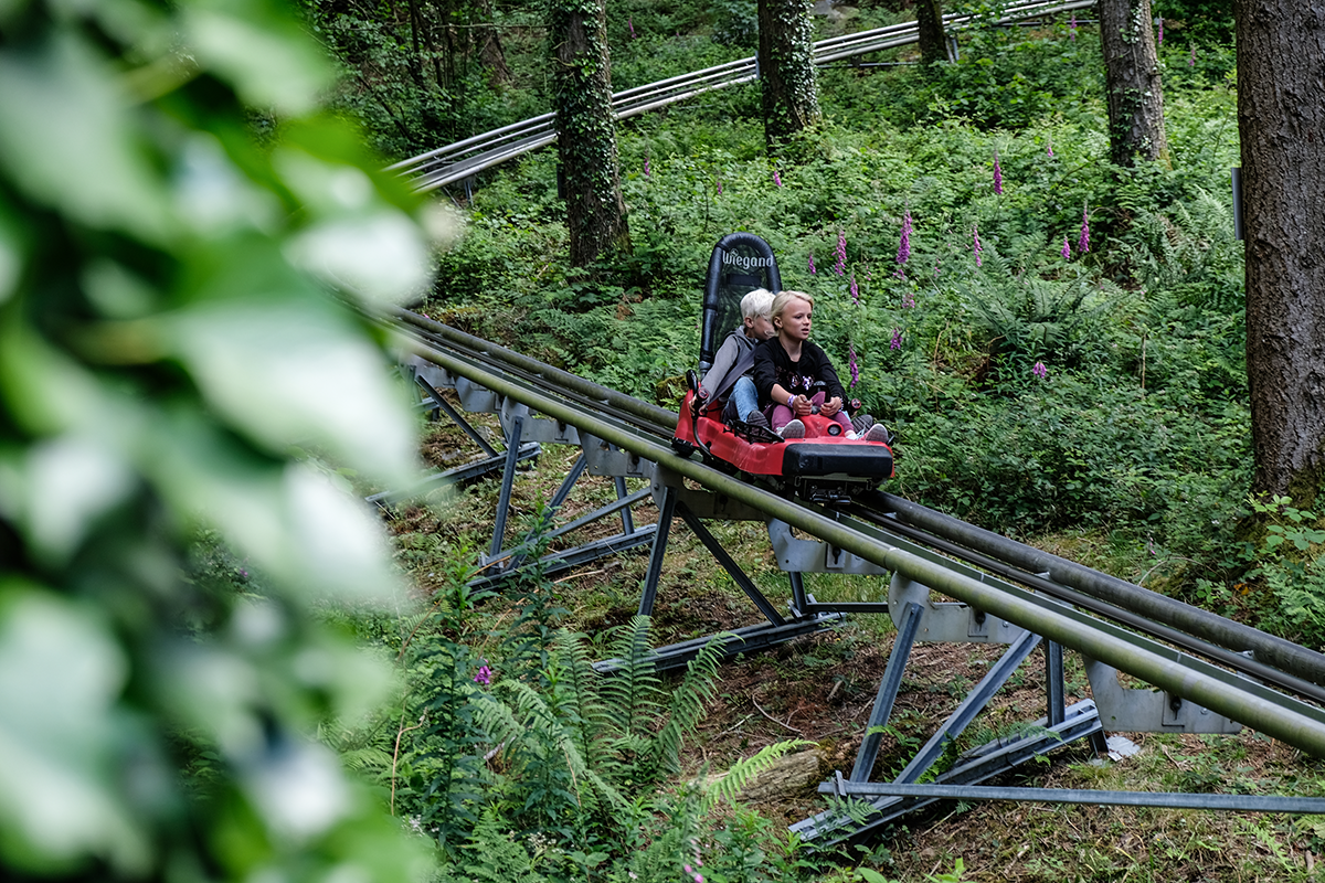 forest coaster Wales