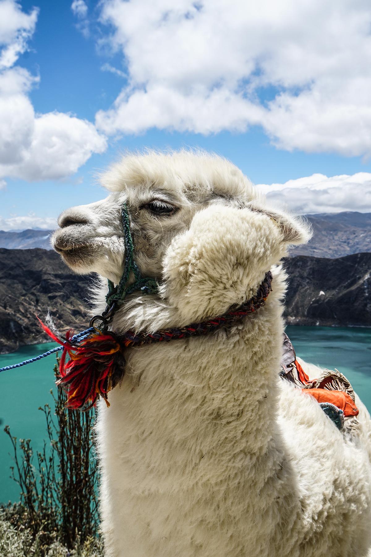resa till ecuador