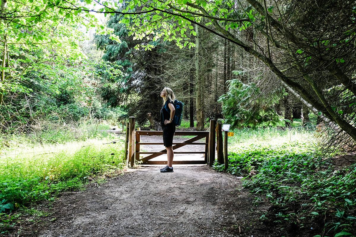 annika skog österlen