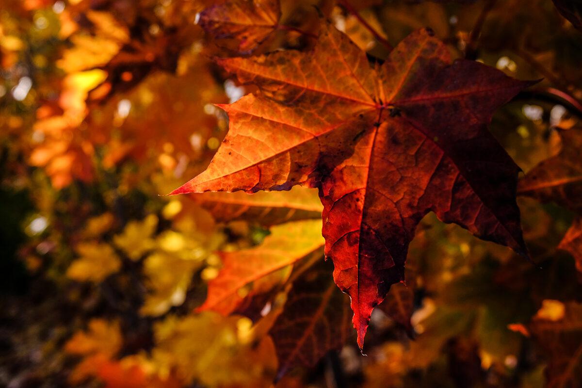 oktober höst i nynäshamn