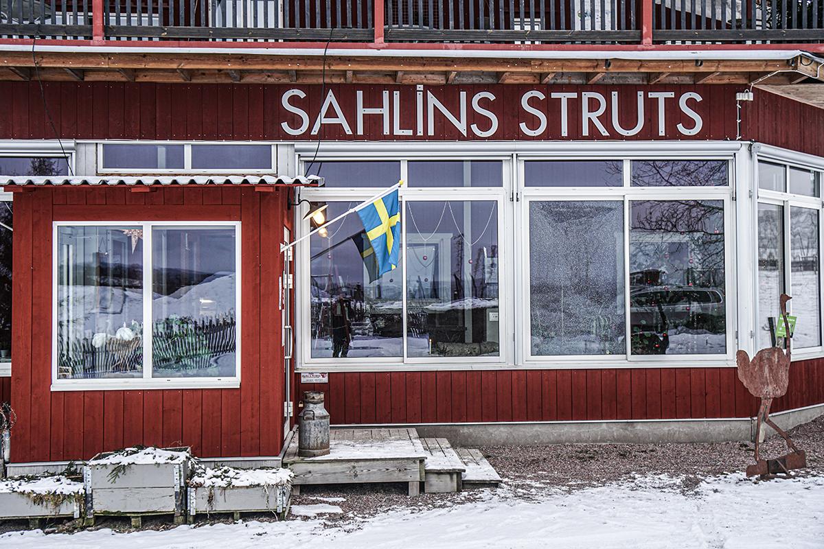 Sahlins Struts
