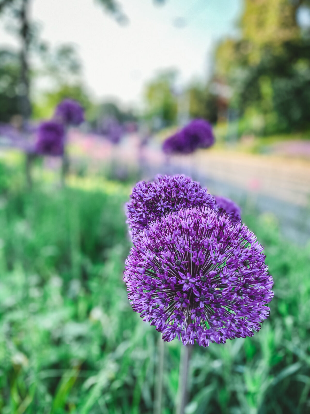 stockholm blommor