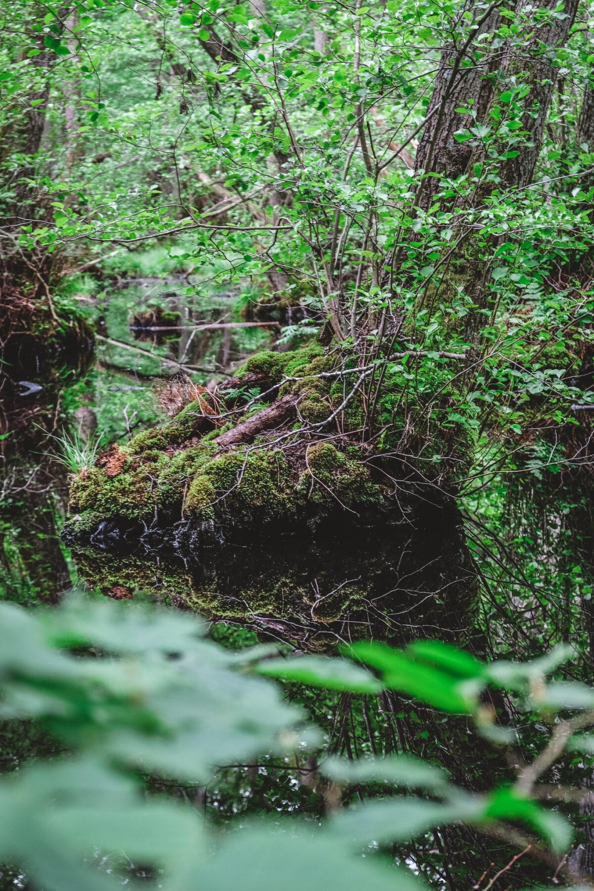 stenhuvuds nationalpark tips