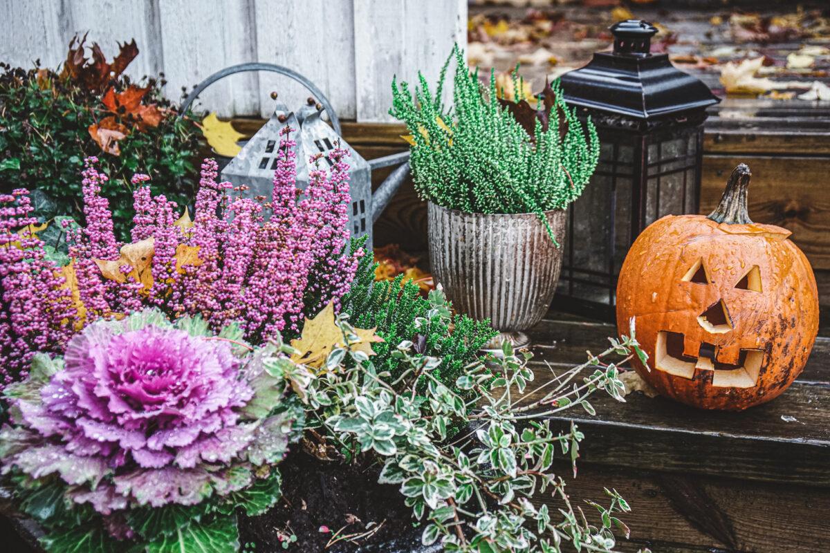 höstlov halloween