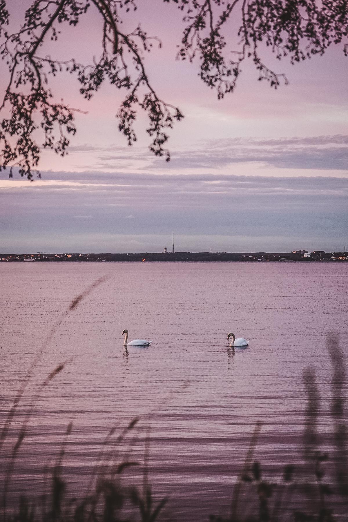 årstidernas skiftningar i Sverige