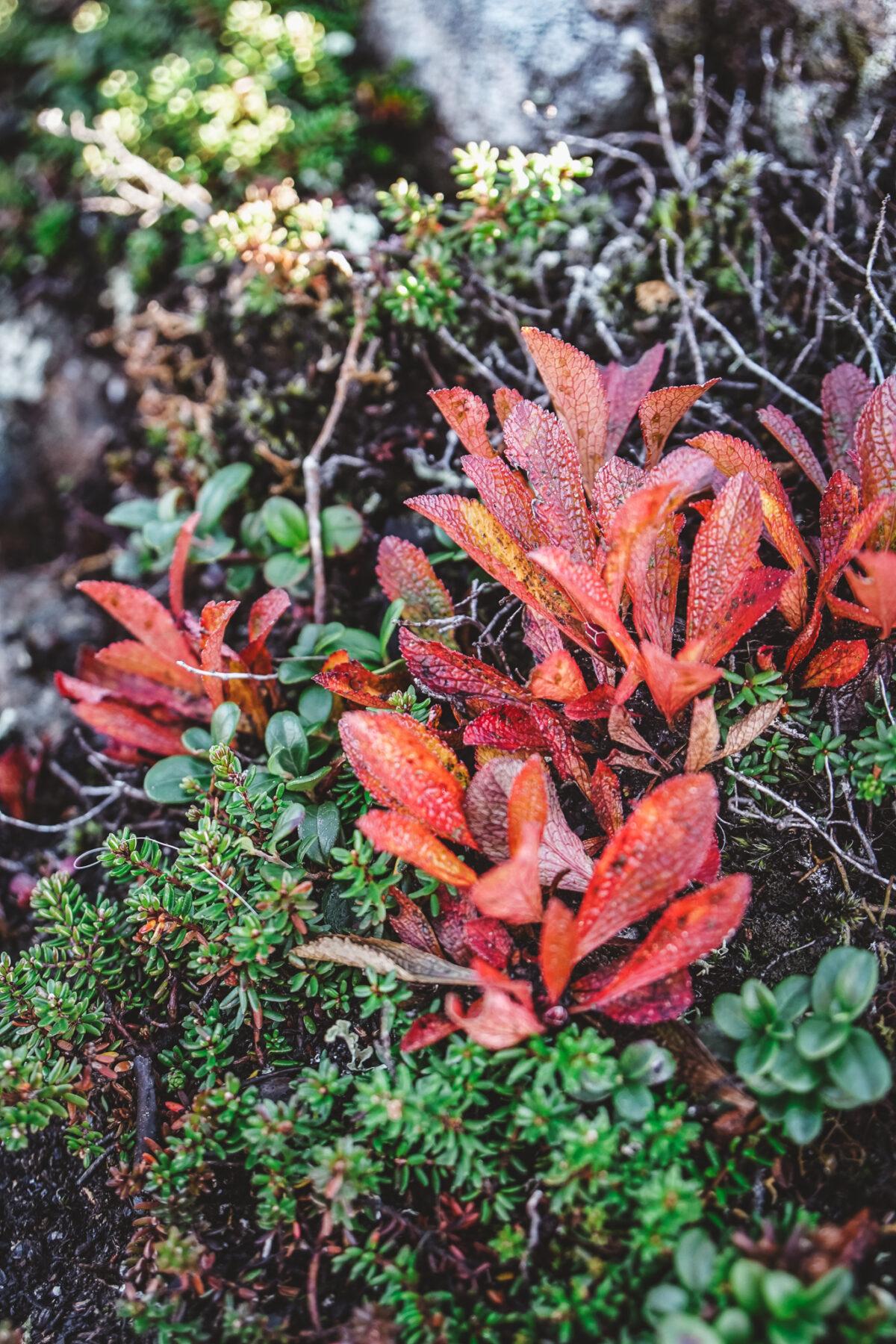 Åre på hösten